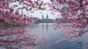 Frühlingsliebe © Sarah Schafer
