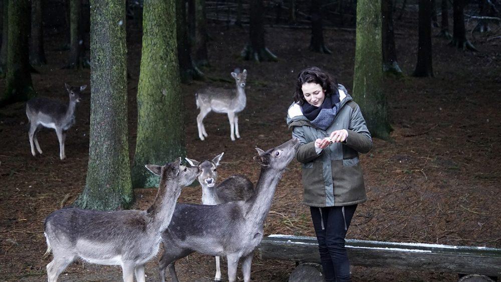 Wildpark Schwarze Berge Hamburg Vahrendorf Ausflug Tipps