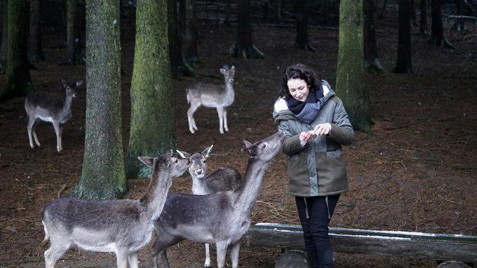 c04755dbba7c1d Heimaturlaub  Rehe füttern im Wildpark Schwarze Berge