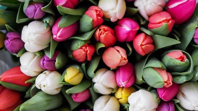 Blumenstrauß, Blumen