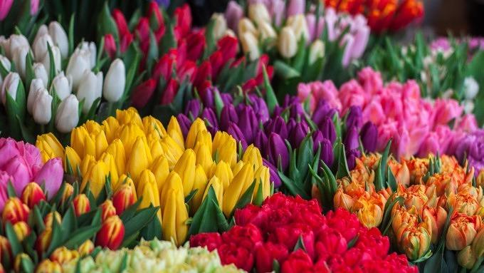 Blumen, Blumensträuße